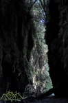 Limestone Creek glow worm caves